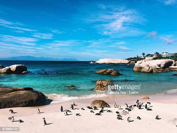penguins at beach against sky - constantia stock pictures, royalty-free photos & images