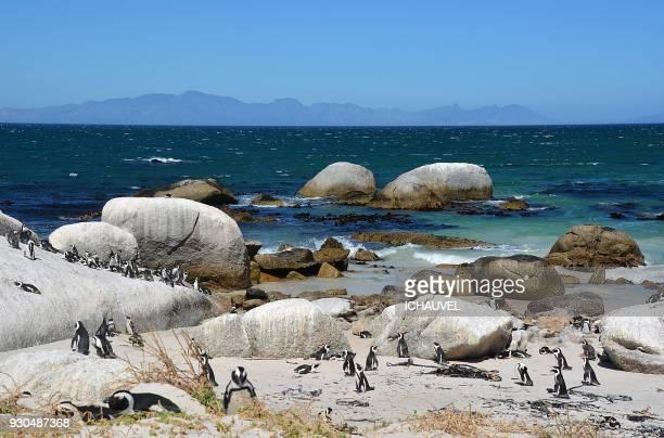 penguins boulders beach south africa - kei stockfoto's en -beelden