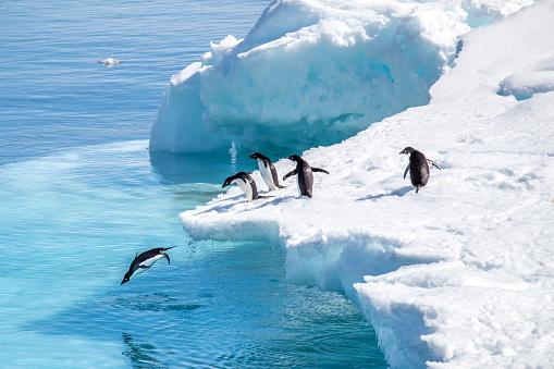 Pinguins em ação 937319228