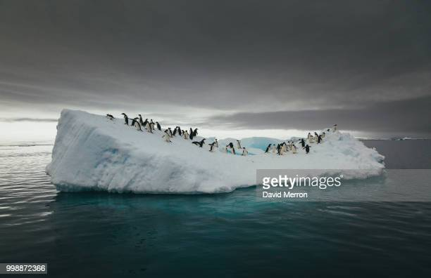 penguins on an iceberg in the sea. - global warming stock pictures, royalty-free photos & images