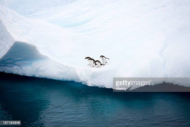 penguins on iceberg antarctica - pinguïn stockfoto's en -beelden