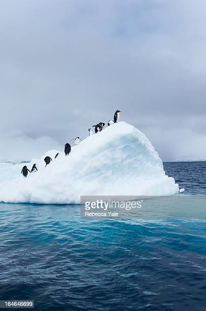 penguins on iceberg - iceberg photos et images de collection