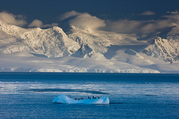 Penguins on lone iceberg with mountain backdrop