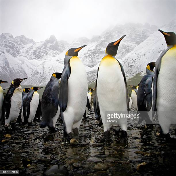 Penguins on Rocky Beach with Snowy Mountains