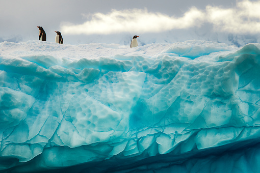 Penguins on the iceberg - gettyimageskorea