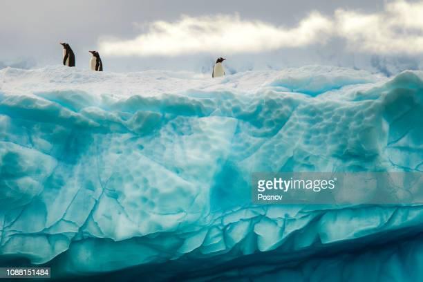 penguins on the iceberg - 南極洲 個照片及圖片檔
