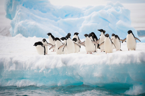 Penguins on the snow 156709702