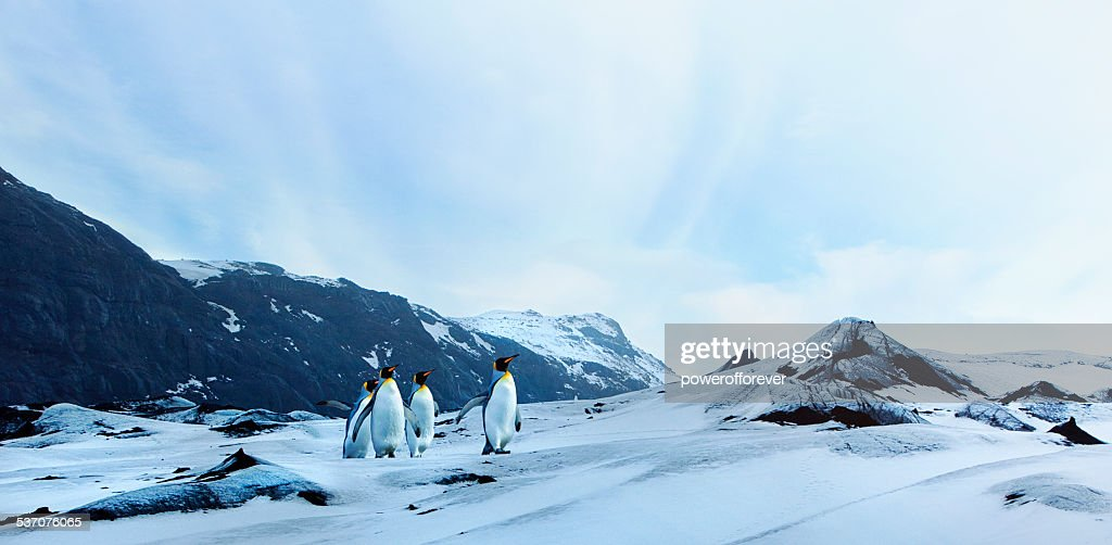 Penguins on Winter Tundra : Stock Photo