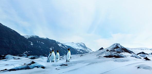 Penguins on Winter Tundra 537076065