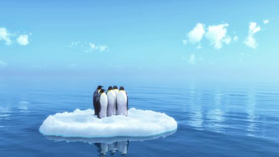 penguins 452628461