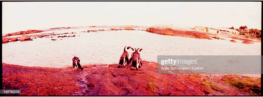 Penguins Standing On Seaside Rock : Foto stock