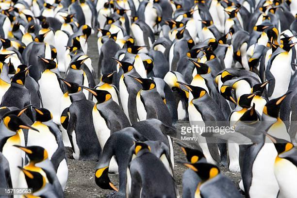 Pinguine auf den Horizont V