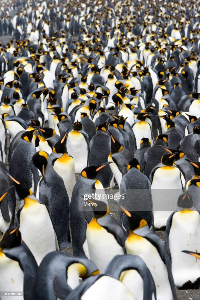 penguins to the horizon VI : Stock Photo