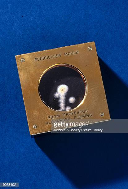 Penicillium Mould from Professor Alexander Fleming 1935' Mounted petri dish containing Pencillin culture originally belonging to Alexander Fleming...