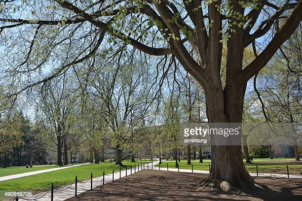 penn state in spring - state college pennsylvania stock photos and pictures