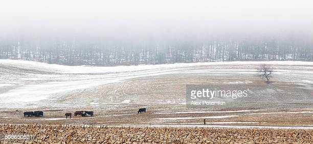 Pennsylvania: rural view of the farm's fields in mountains
