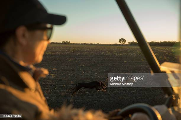 Penny McIntosh takes a a couple of the farm's kelpie dogs for a good run; a good working dog can do the work of 2 or 3 people. On July 5, 2018 in...