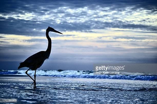 pensacola beach - crane bird stock photos and pictures