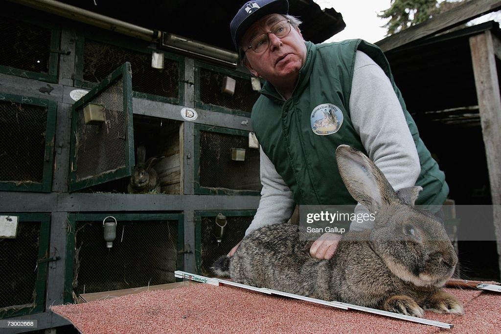 Giant Rabbit Farmer to Supply North Korea : News Photo