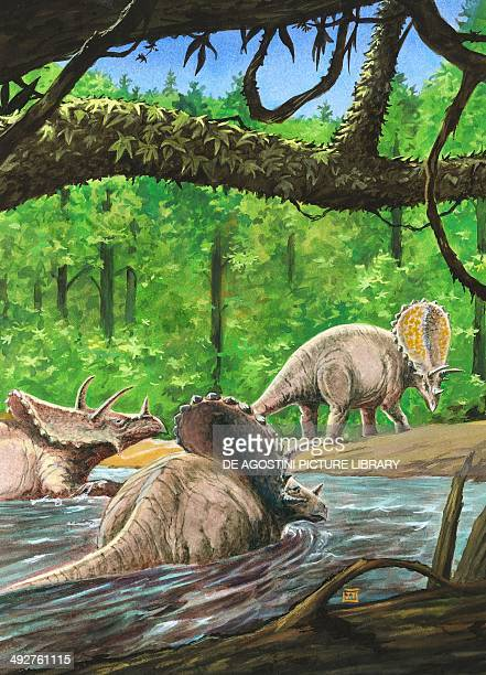 Pentaceratops sternbergii, Ceratopsidae, Late Cretaceous. Artwork by J Dang.