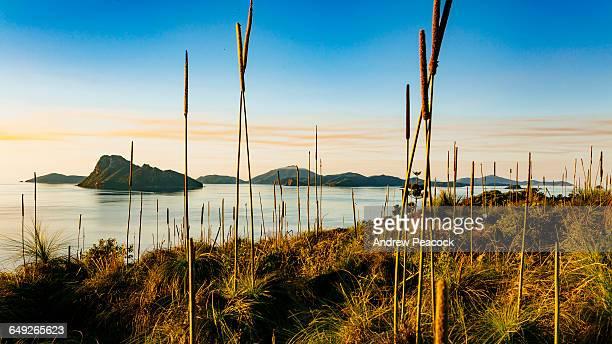 pentecost island from south east head trail - île d'hamilton photos et images de collection
