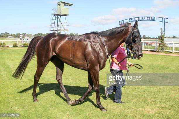Penthouse Poet after winning the Kwik Tip Bins Rising Stars Race BM64 Handicap at Sale Racecourse on February 20 2018 in Sale Australia