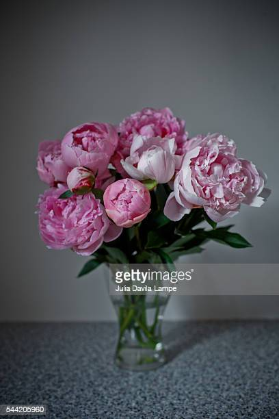 peonies - julia rose stock photos and pictures