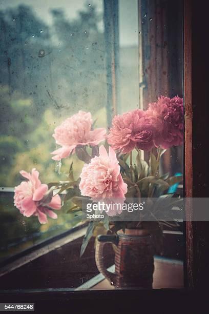 peony flowers at the window - mazzi fiori di campo foto e immagini stock