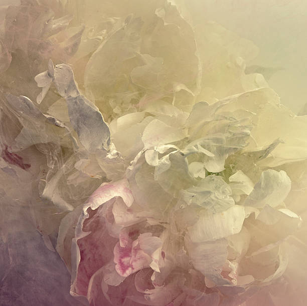 Peony in a tank of water and dissolving paint