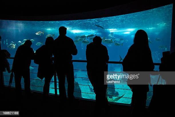 People admire fishes in aquarium