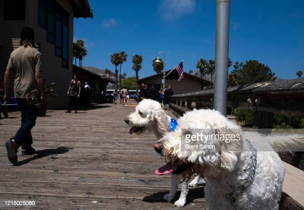 People and dogs alike enjoy the less restricted beachfront over Memorial Day weekend May 24 2020 in Ventura California Officials said people for the...
