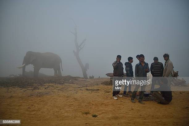 People and elephant photographed during early morning in winter at bank of Yamuna on December 9 2015 in New Delhi India
