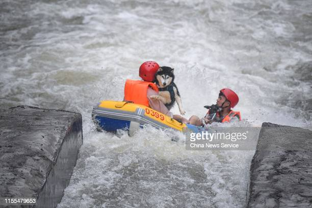 People and their dog ride in inflatable boat as they take part in a rafting game for dogs on June 12 2019 in Pingjiang County Hunan Province of China