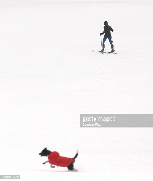 People and their dogs enjoy and afternoon in the sleet and snow in Brooklyn's Prospect Park on March 14 2017 in New York City New York City and New...