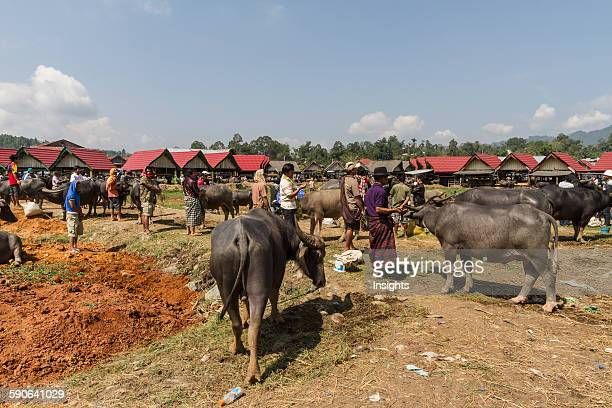 People and water buffaloes at the Bolu livestock market Rantepao Toraja Land South Sulawesi Indonesia