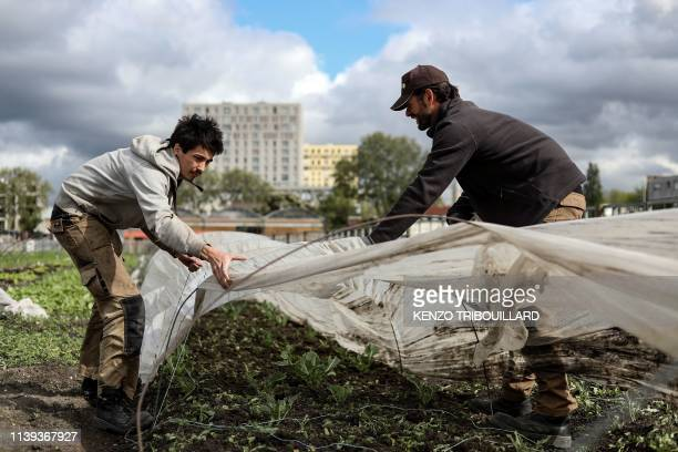 """People are at work in an urban farm named """"La ferme ouverte"""" in Saint-Denis, near Paris, on April 24, 2019."""