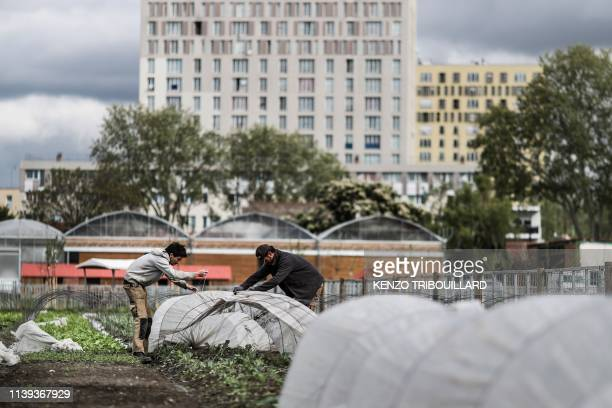 People are at work in an urban farm named La ferme ouverte in SaintDenis near Paris on April 24 2019