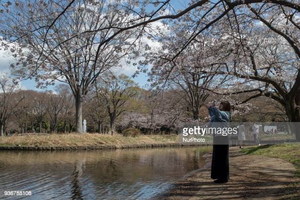 People are seen enjoying quotHanamiquot a popular activity during cherry blossom season in Japan at Yoyogi Park in Tokyo Japan on Friday March 23 2018