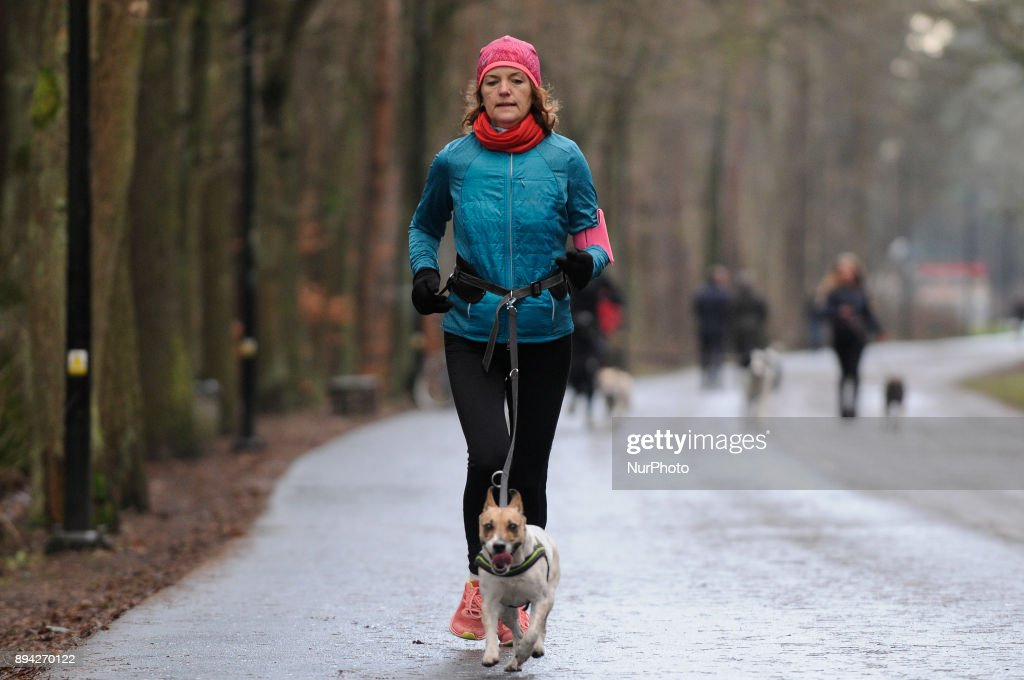 Jogging with Dogs in Bydgoszcz : ニュース写真