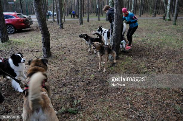 People are seen exercising with their pet dogs in Bydgoszcz Poland on December 17 2017 A local group called HDR Wataha organizes activities that...