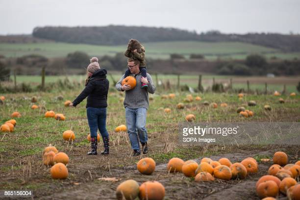 People are seen while searching for their favourite pumpkin in the farm during the pumpkin festival Pumpkin market is one of the exiting things...