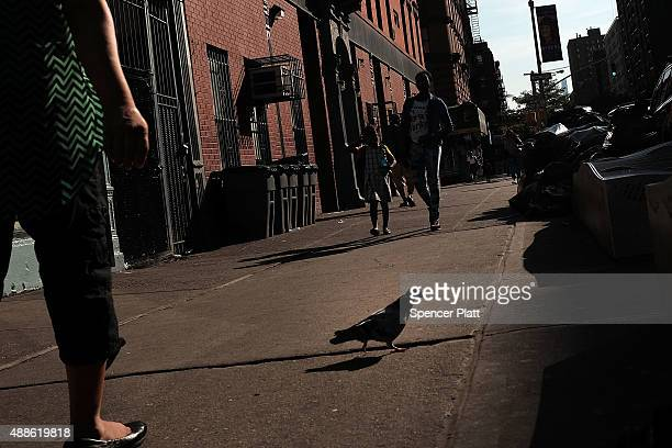 People are viewed in an area which has witnessed an explosion in the use of K2 or 'Spice', a synthetic marijuana drug, in East Harlem on September...