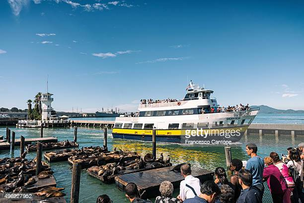 people at fisherman's wharf - fishermans wharf stock pictures, royalty-free photos & images