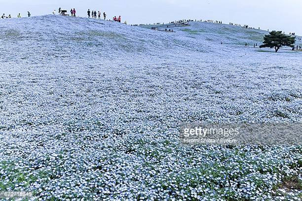 People At Flowers On Field In Hitachi Seaside Park