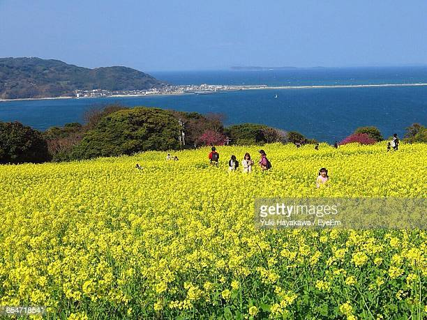 people at yellow flowers field against sky - fukuoka city stock pictures, royalty-free photos & images