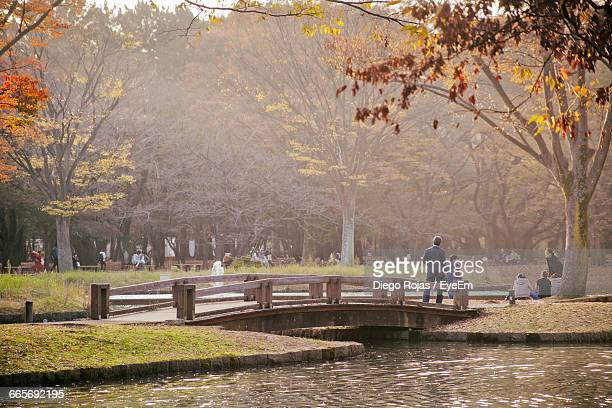 People At Yoyogi Park By Pond During Foggy Weather