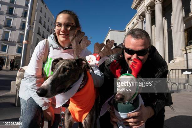 people attend the 8th 'San Perrestre' dog race to raise the people's awareness of adopting pets instead buy them in Madrid Spain 30 December 2018 The...