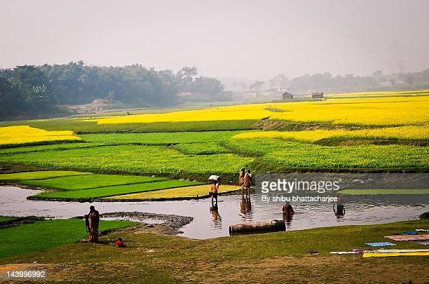 People bathing in Brahmaputra river