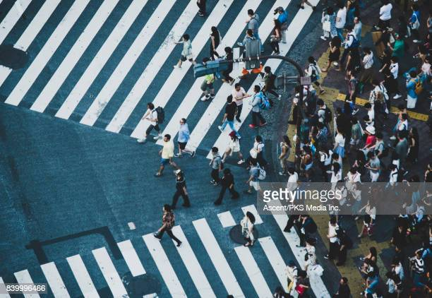 People Begging to Cross Shibuya Intersection