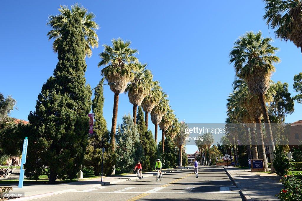 People biking and jogging in University of Arizona : Stock Photo